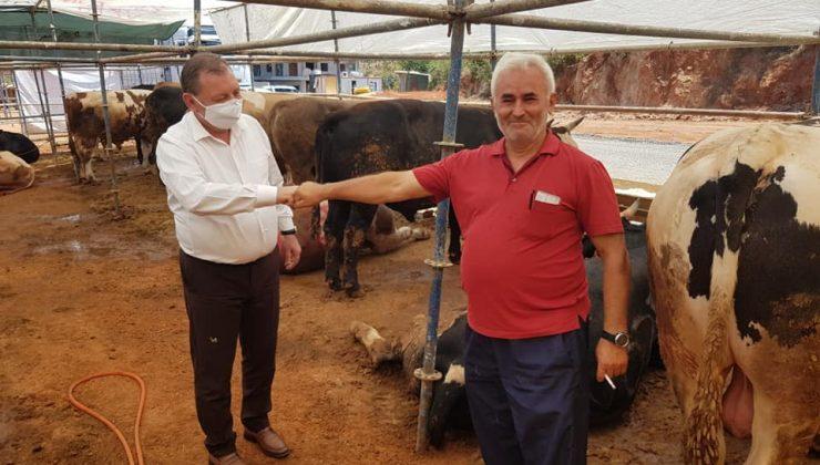 Alanya'da hayvan pazarında hareketlilik başladı