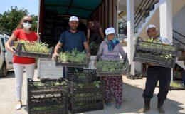 Antalya BŞB'den Alanyalı üreticilere fide desteği